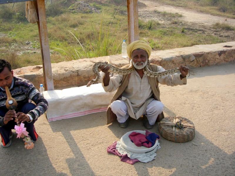 Inde, visite du Radjastan 00211