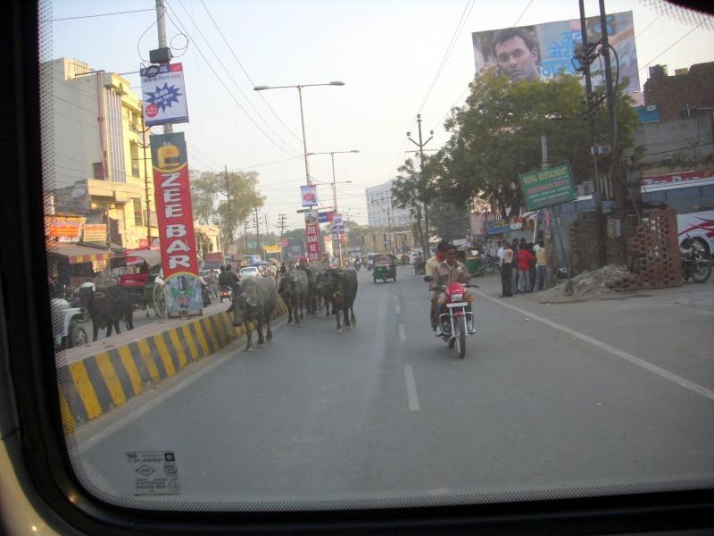 Inde, visite du Radjastan 07010