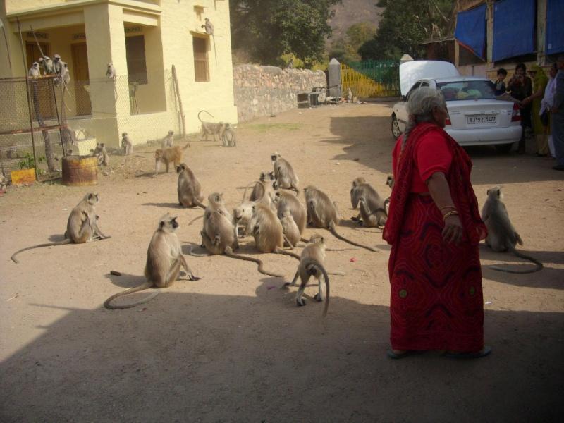 Inde, visite du Radjastan - Page 2 1016