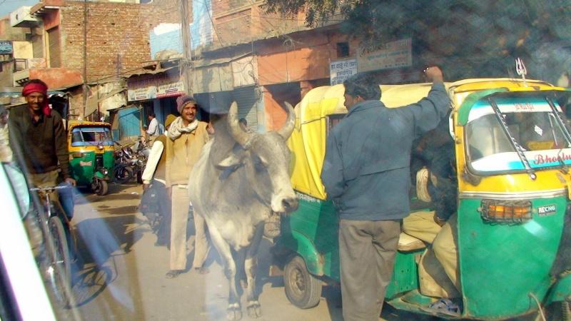 Inde, visite du Radjastan 110