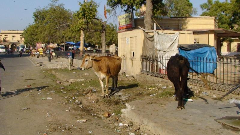 Inde, visite du Radjastan 1110