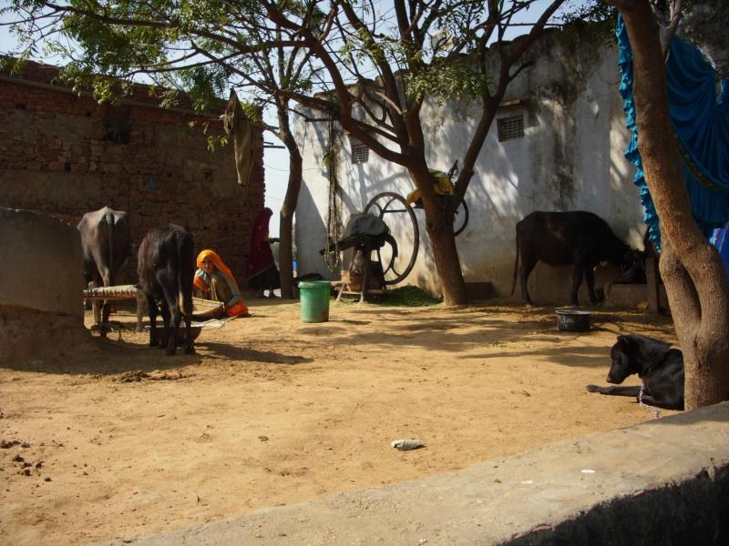 Inde, visite du Radjastan 610