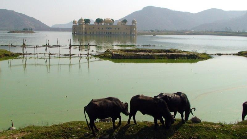 Inde, visite du Radjastan 912