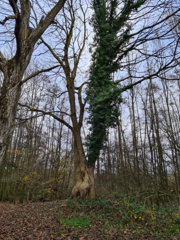 Des arbres , pour l'Arbre . - Page 3 20201210