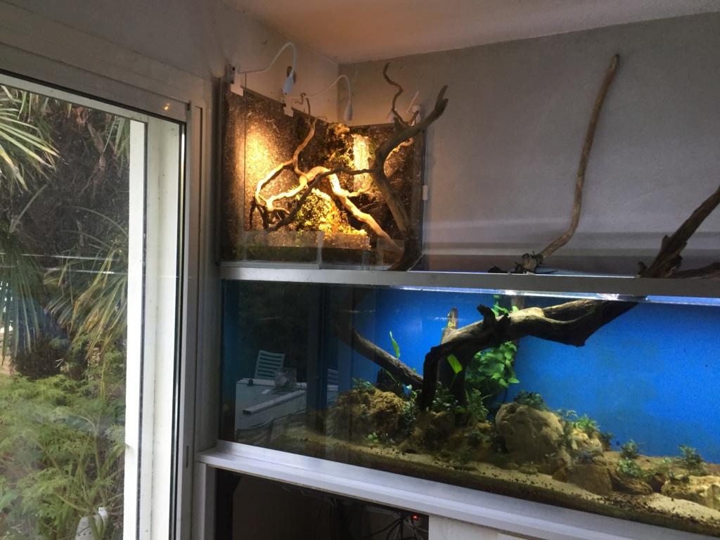 """mur végétal """"aquaterrarium"""" sans vitre 92353211"""