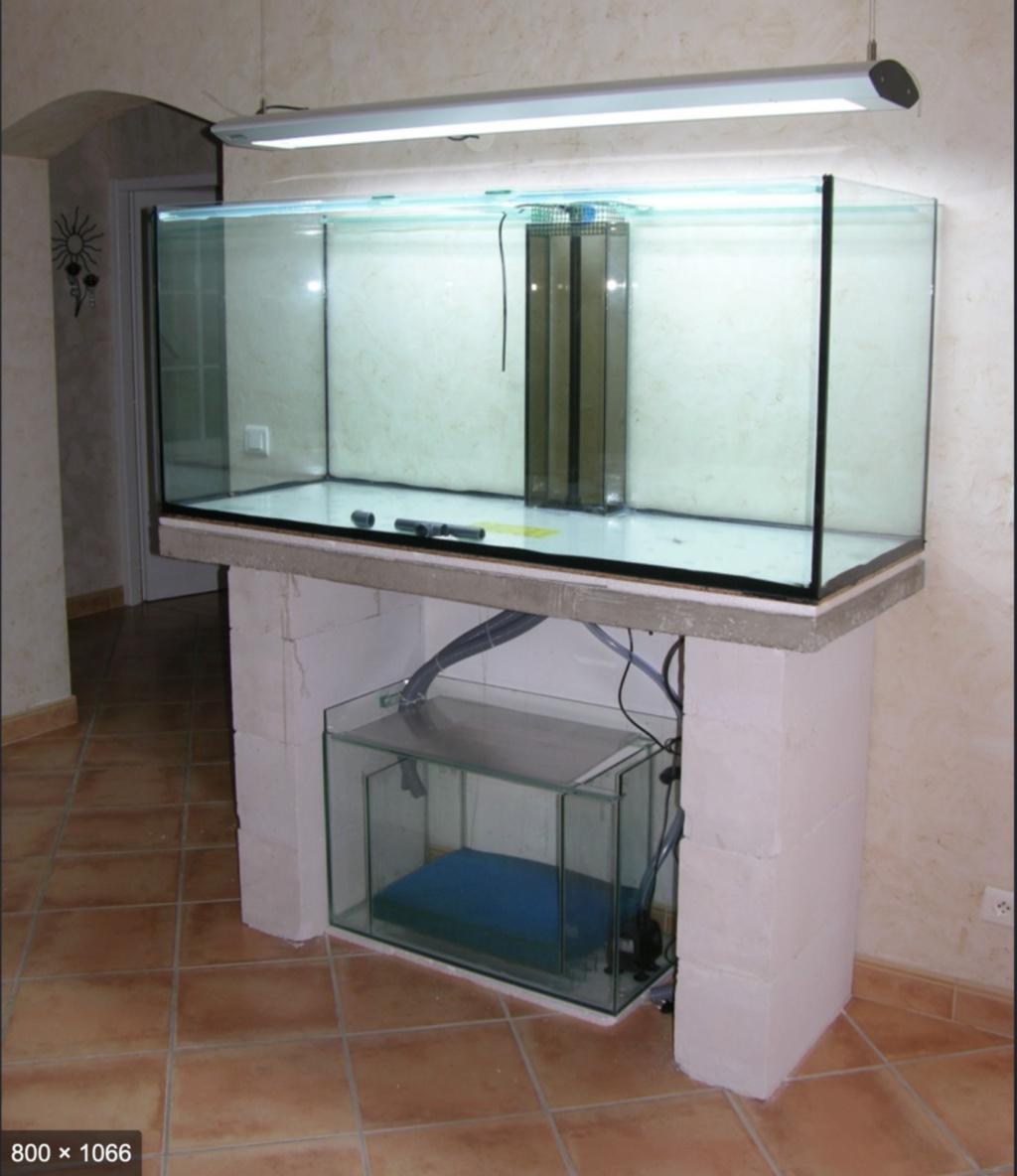 Projet paludarium pour une tortue aquatique  Captu167