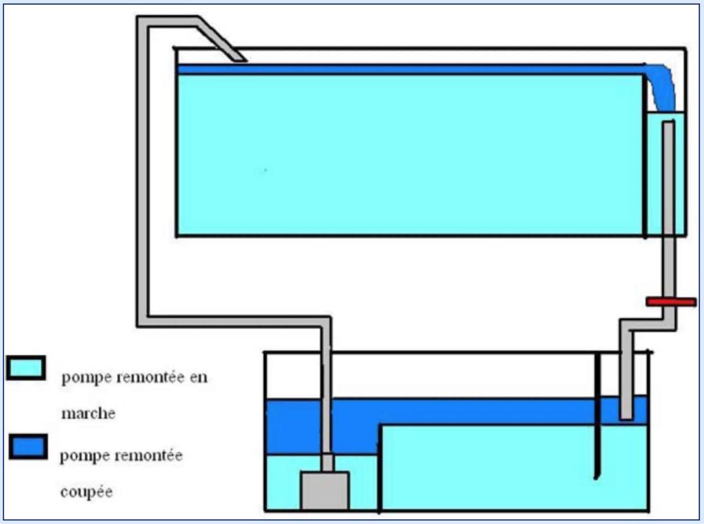 Projet paludarium pour une tortue aquatique  Captu168