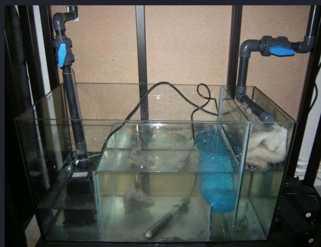 Projet paludarium pour une tortue aquatique  Captu170