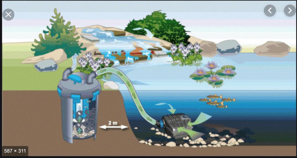 Projet paludarium pour une tortue aquatique  Captu174