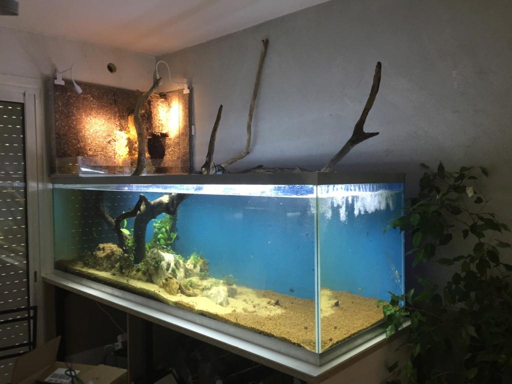 Aquarium Amazonien 720L avec mur végétale +cascade + Lagune  Img_0120