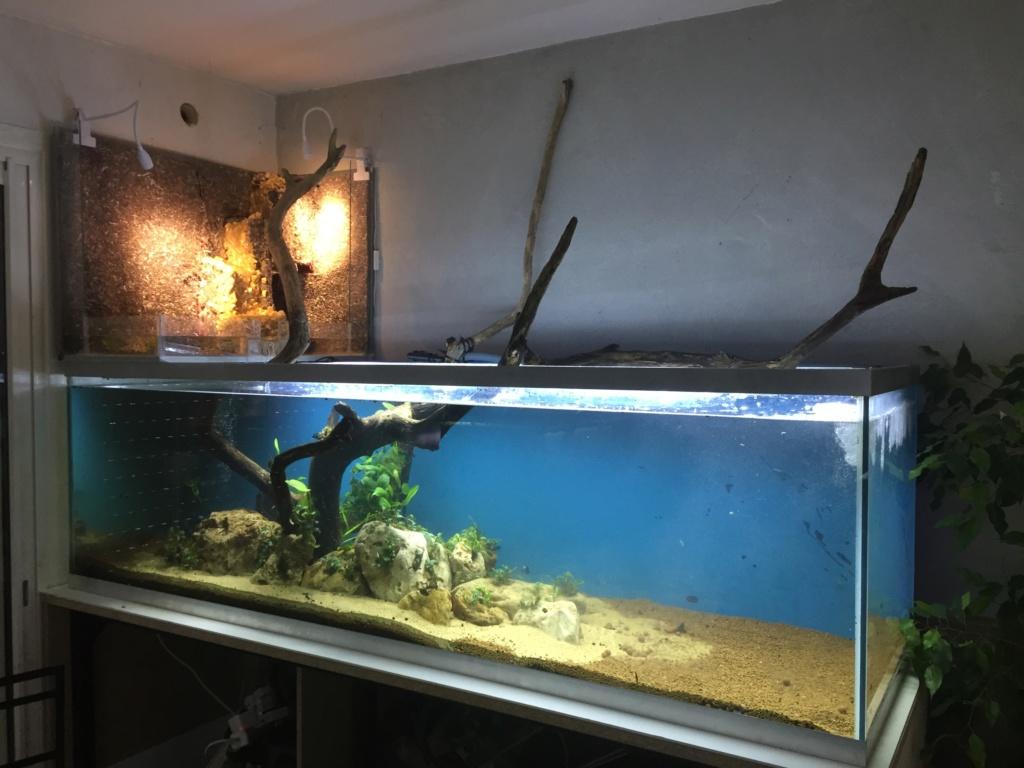Aquarium Amazonien 720L avec mur végétale +cascade + Lagune  Img_0121