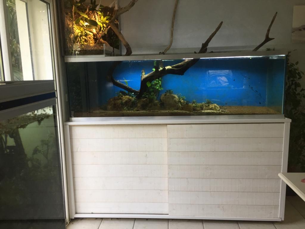 Aquarium Amazonien 720L avec mur végétale +cascade + Lagune  - Page 2 Img_0622