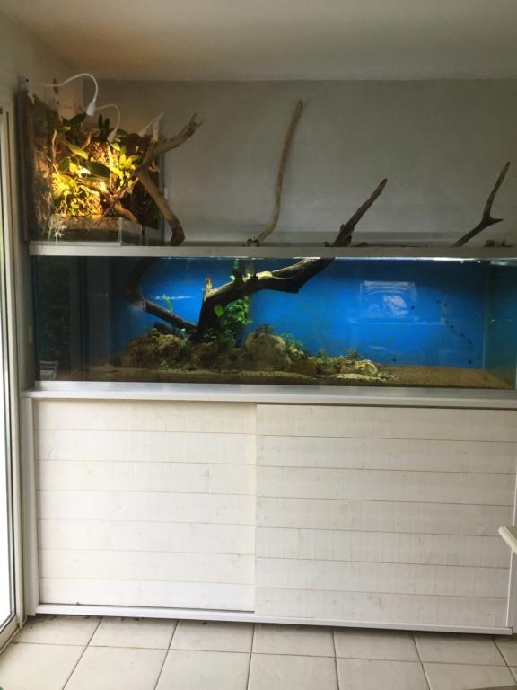 Aquarium Amazonien 720L avec mur végétale +cascade + Lagune  - Page 2 Img_0623