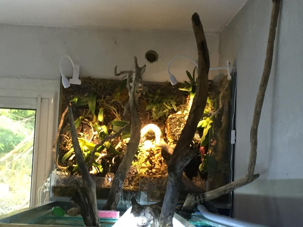Aquarium Amazonien 720L avec mur végétale +cascade + Lagune  - Page 2 Img_0624