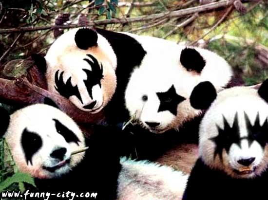 KISS DESSINS... - Page 2 Panda-10