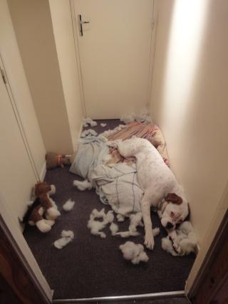 Bétises au jour le jour de nos chiens :-( - Page 2 Dsc01510
