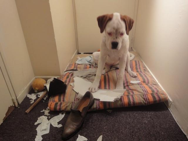 Bétises au jour le jour de nos chiens :-( - Page 2 Img_0810