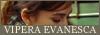 Vipera Evanesca* Vebutt10