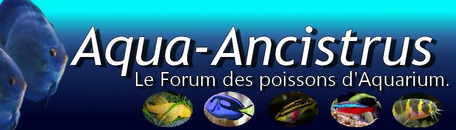 Aqua-ancistrus