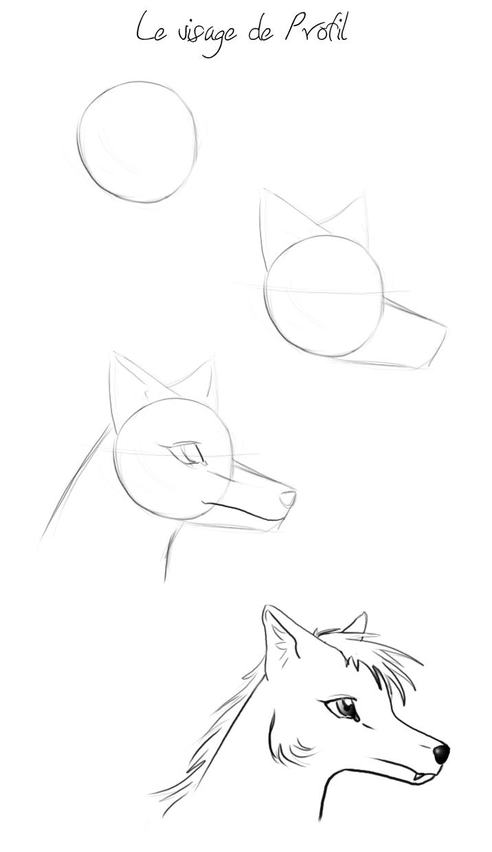 Loup caricatural ( buste ) [ Difficile + ] Tuto_p10