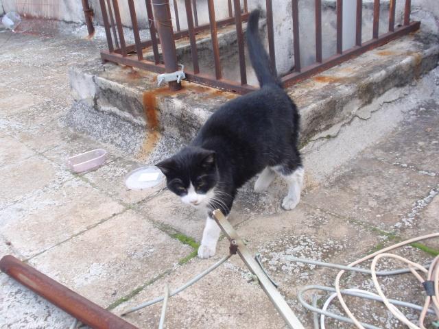 πεταει πεταει...... η γατα; 29-1-011