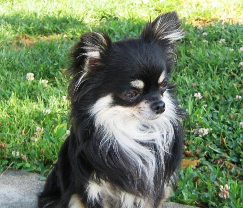 Mes débuts chaotiques dans l'élevage canin (parents P3) - Page 3 Black_11