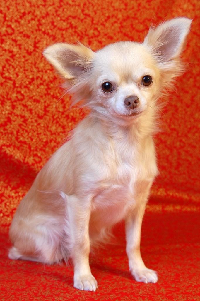 Mes débuts chaotiques dans l'élevage canin (parents P3) - Page 3 Eyna_212