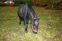 KIWI et CAPUCINE - ONC poney présumées nées en 1990 - adoptées en octobre 2008 par caro38 Img_1010