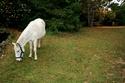 KIWI et CAPUCINE - ONC poney présumées nées en 1990 - adoptées en octobre 2008 par caro38 Img_1011