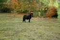 KIWI et CAPUCINE - ONC poney présumées nées en 1990 - adoptées en octobre 2008 par caro38 Img_1012