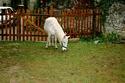 KIWI et CAPUCINE - ONC poney présumées nées en 1990 - adoptées en octobre 2008 par caro38 Img_1013