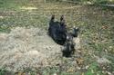 Lili et Summer - ponettes shetlands - adoptées en avril 2009 par agnes P - Page 8 Img_1115
