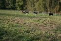 Lili et Summer - ponettes shetlands - adoptées en avril 2009 par agnes P - Page 8 Img_1212