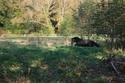Lili et Summer - ponettes shetlands - adoptées en avril 2009 par agnes P - Page 8 Img_1311