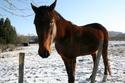 Bea de la Mesliere 19 ans TF -- adoptée en février 2009 Img_2012