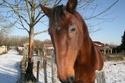 Bea de la Mesliere 19 ans TF -- adoptée en février 2009 Img_2013