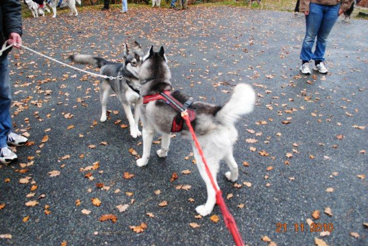 Balade et pic nic en foret de fontainebleau le 21 Novembre 2010 - Page 5 2910