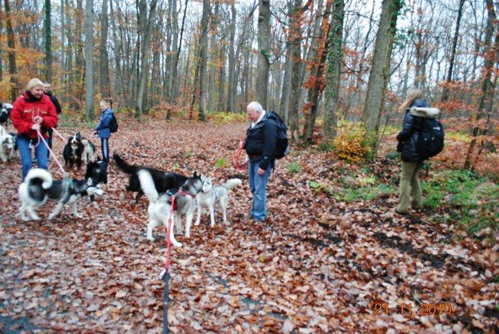 Balade et pic nic en foret de fontainebleau le 21 Novembre 2010 - Page 5 3210