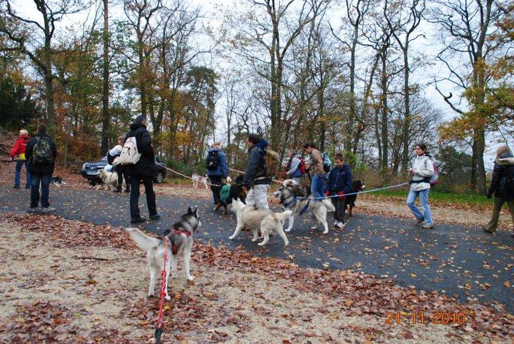 Balade et pic nic en foret de fontainebleau le 21 Novembre 2010 - Page 5 510
