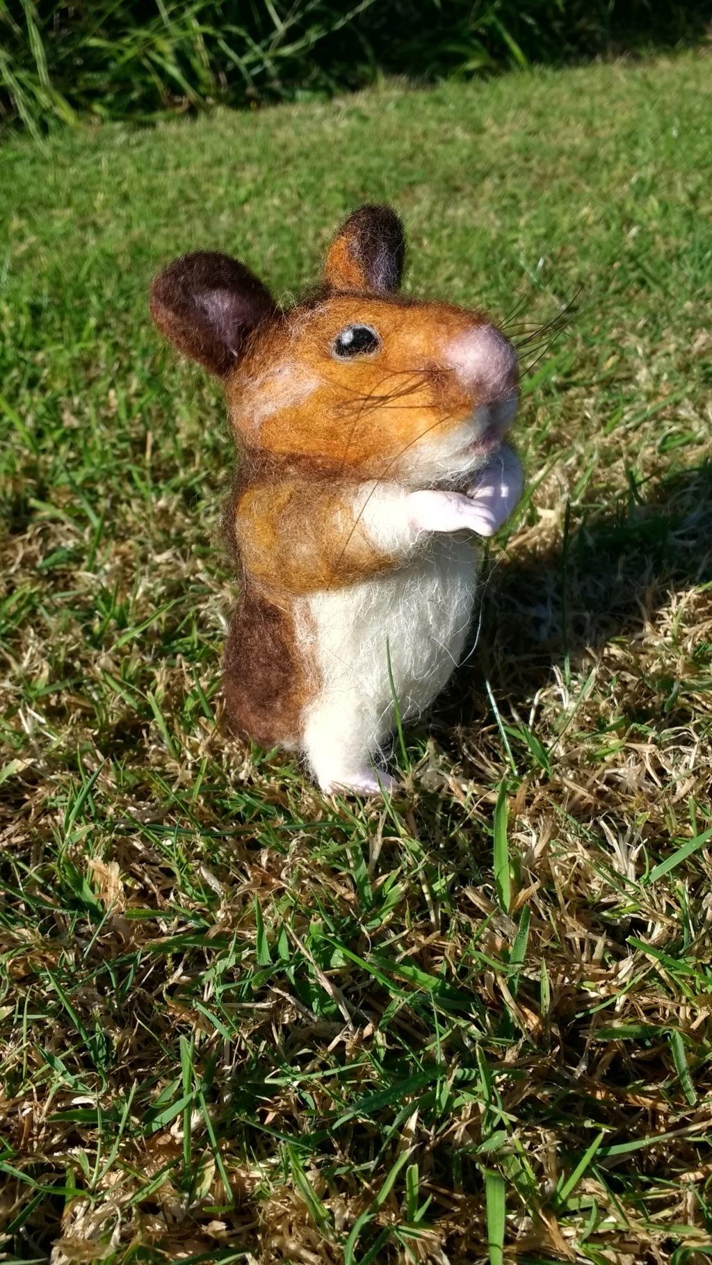 Hamster, commission. Img_2017