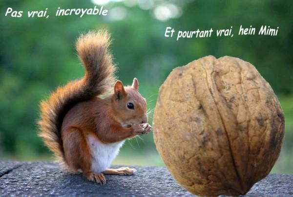 Aimez-vous les écureuils - Page 3 Fond_e11