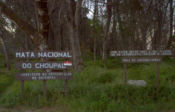 Região Centro -As Beiras Choupa17