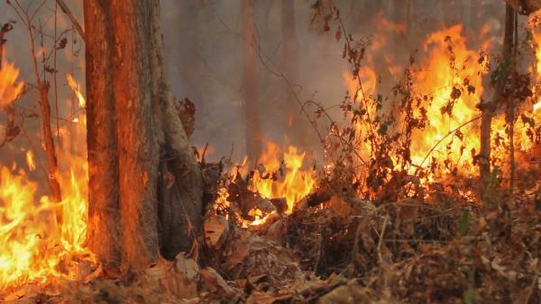 ما هي العوامل التي تتسبب في موت الأشجار ؟  Tree-d10