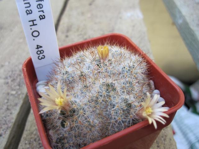 In flower today Prolif10