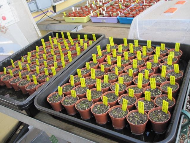 Seed sowing 2010 Seedli10