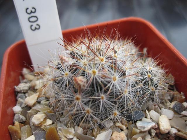 M. prolifera ID. Wk_30310