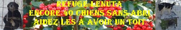 BOXES POUR LE REFUGE DE LENUTA - ENCORE 40 CHIENS SANS ABRIS - Page 10 Appeld11