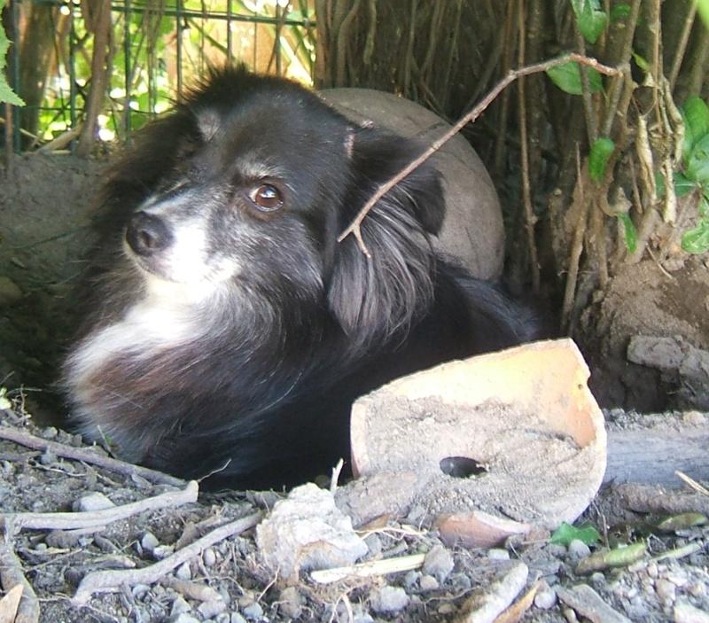 NATACHA (f) croisée papillon, née en 2006, 6 kilos, vient du refuge de Tina (moldavie) - ADOPTEE - Nana110