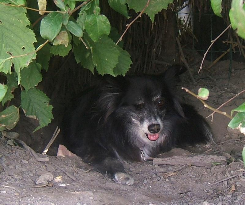 NATACHA (f) croisée papillon, née en 2006, 6 kilos, vient du refuge de Tina (moldavie) - ADOPTEE - Tacha_15