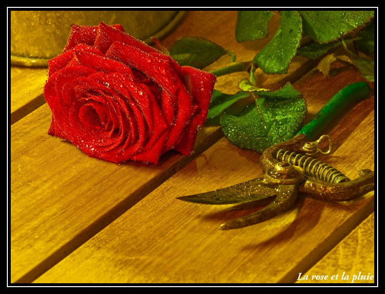 Vos plus belles photos du mois de février 2009 Nature10